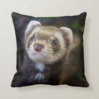 Ferret Cushion