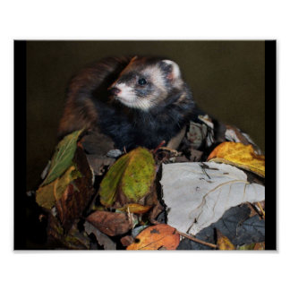Ferret with Leaves Poster