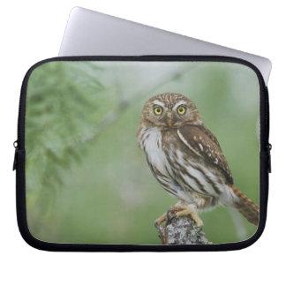 Ferruginous Pygmy-Owl, Glaucidium brasilianum, 3 Laptop Sleeve