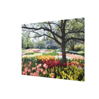 Field of flowers on a Spring morning Canvas Print