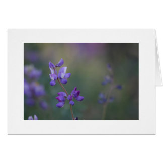 field of Lupine Card