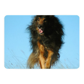 Finnish Lapphund Dog 5x7 Paper Invitation Card
