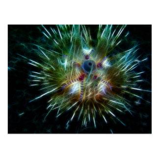 Fire Sea Urchin Post Card
