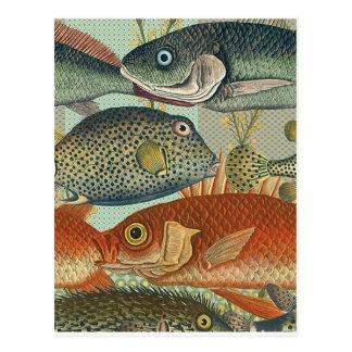 Fish and Seaweed Postcard