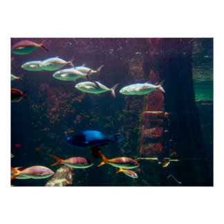 Fish in Aquarium Poster