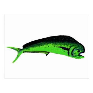 Fish Mahimahi Green The MUSEUM Zazzle Gifts Postcard