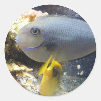 fish,salt water classic round sticker