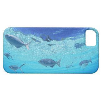 Fishes in the sea 4 iPhone 5 cases