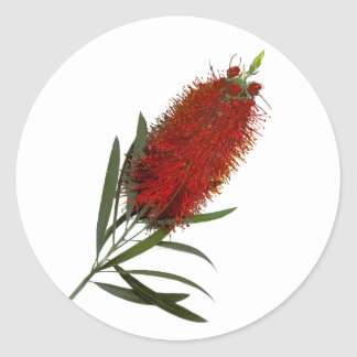 Flame Red Bottle Brush Classic Round Sticker
