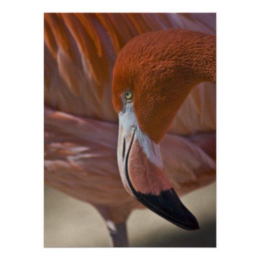 Flaming Flamingo Custom Invites