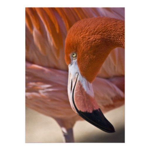 Flaming Flamingo Invitations