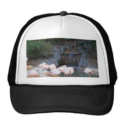Flamingo and Waterfall Trucker Hats