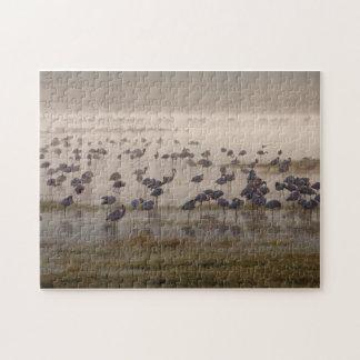 Flamingos in the Mist Puzzle