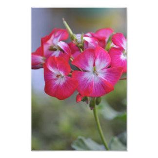 Flores, Flowers Photo Art