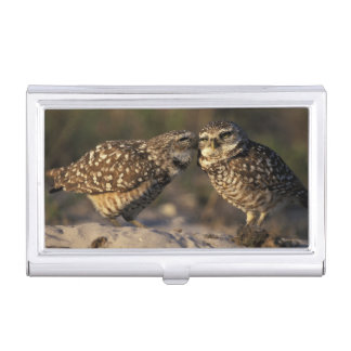 Florida, Fort Myers. Burrowing Owl pair bonding Business Card Holder