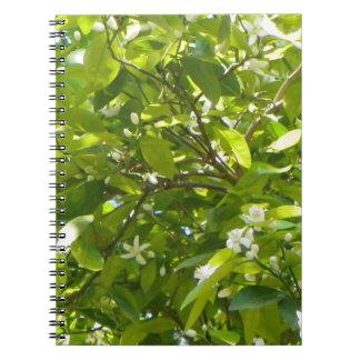 FLORIDA ORANGE BLOSSOM Notebook