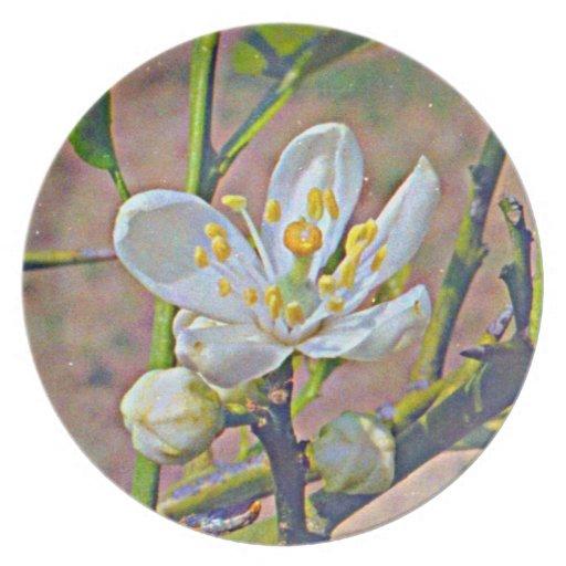Florida Orange Blossom Party Plates