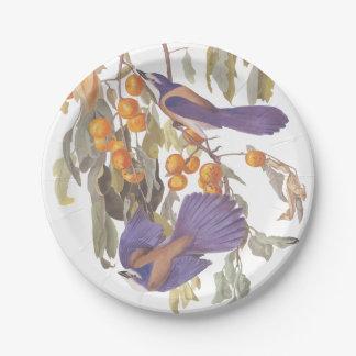 Florida Scrub Jay Audubon Bird on Orange Tree Paper Plate