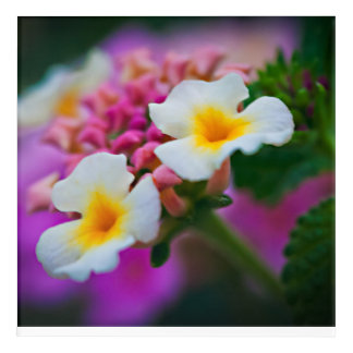 Flower in a Flower Acrylic Print