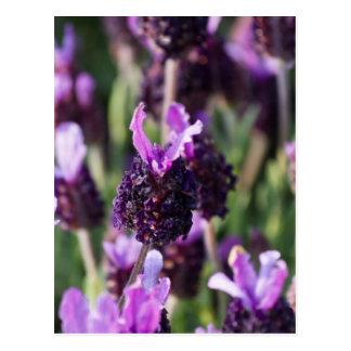 flower in the meadow postcard
