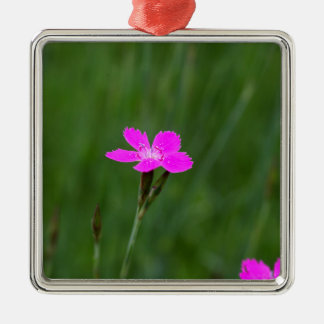 Flower of a maiden pink Silver-Colored square decoration