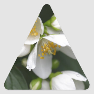 Flower of an English dogwood bush Triangle Sticker