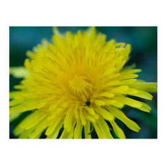 Flower spider postcard