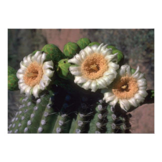 Flowering Cactus Personalized Announcements