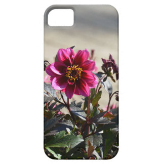 Flowers Case For The iPhone 5