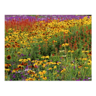 Flowers Display at International Peace Gardens Postcard