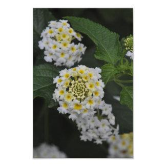 Flowers - Flores Photo