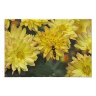 Flowers - Flores Photograph