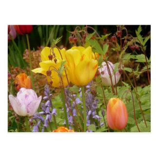 Flowers Of Tenderness Postcard