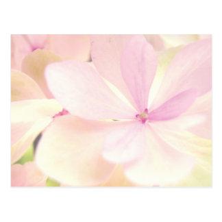 Flowers tenderness post cards