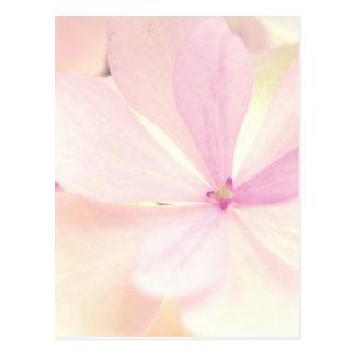 Flowers tenderness postcard