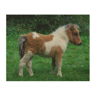 Fluffy Adorable Dartmoor Pony Wood Print