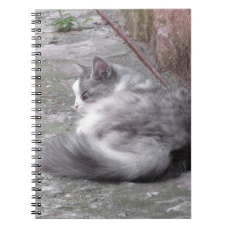 Fluffy cat sleeping crouch on the floor notebook