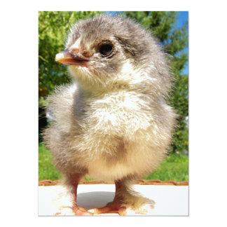 fluffy little chicken card