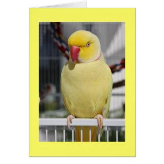 Fluffy Lutino Indian Ringneck Parakeet Card
