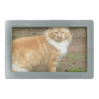 Fluffy Orange and White Kitty Belt Buckle