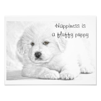 Fluffy White Puppy Happiness Poster