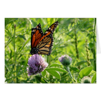 Fly With A Broken Wing, Monach Butterfly Note Card