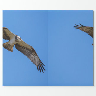 Flying osprey with a target in sight wrapping paper