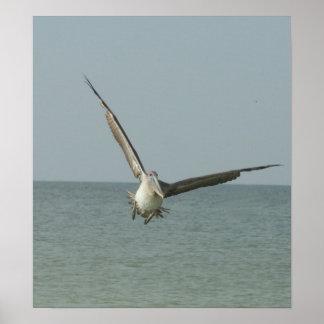 Flying Pelican Print