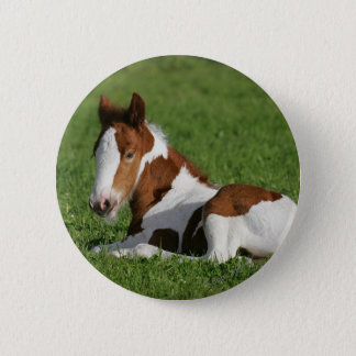 Foal Laying in Grass 6 Cm Round Badge