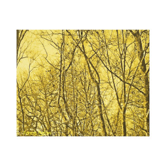 Forest Aglow Canvas Print