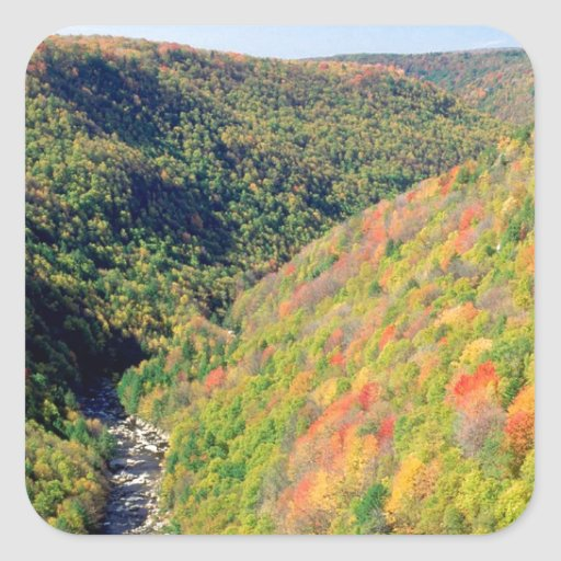 Forest Blackwater River Pendleton Virginia Stickers