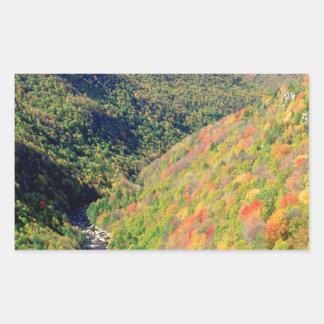 Forest Blackwater River Pendleton Virginia Rectangular Stickers