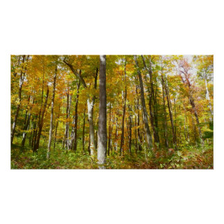 Forest of Yellow Leaves Autumn Nature Photography Poster