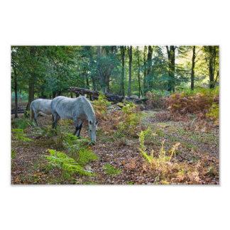 Forest Pony - Photo print